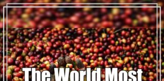 The world most expensive coffee